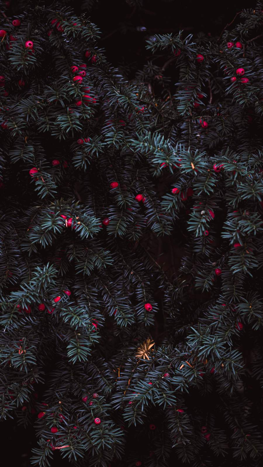 Pine Leaves iPhone Wallpaper