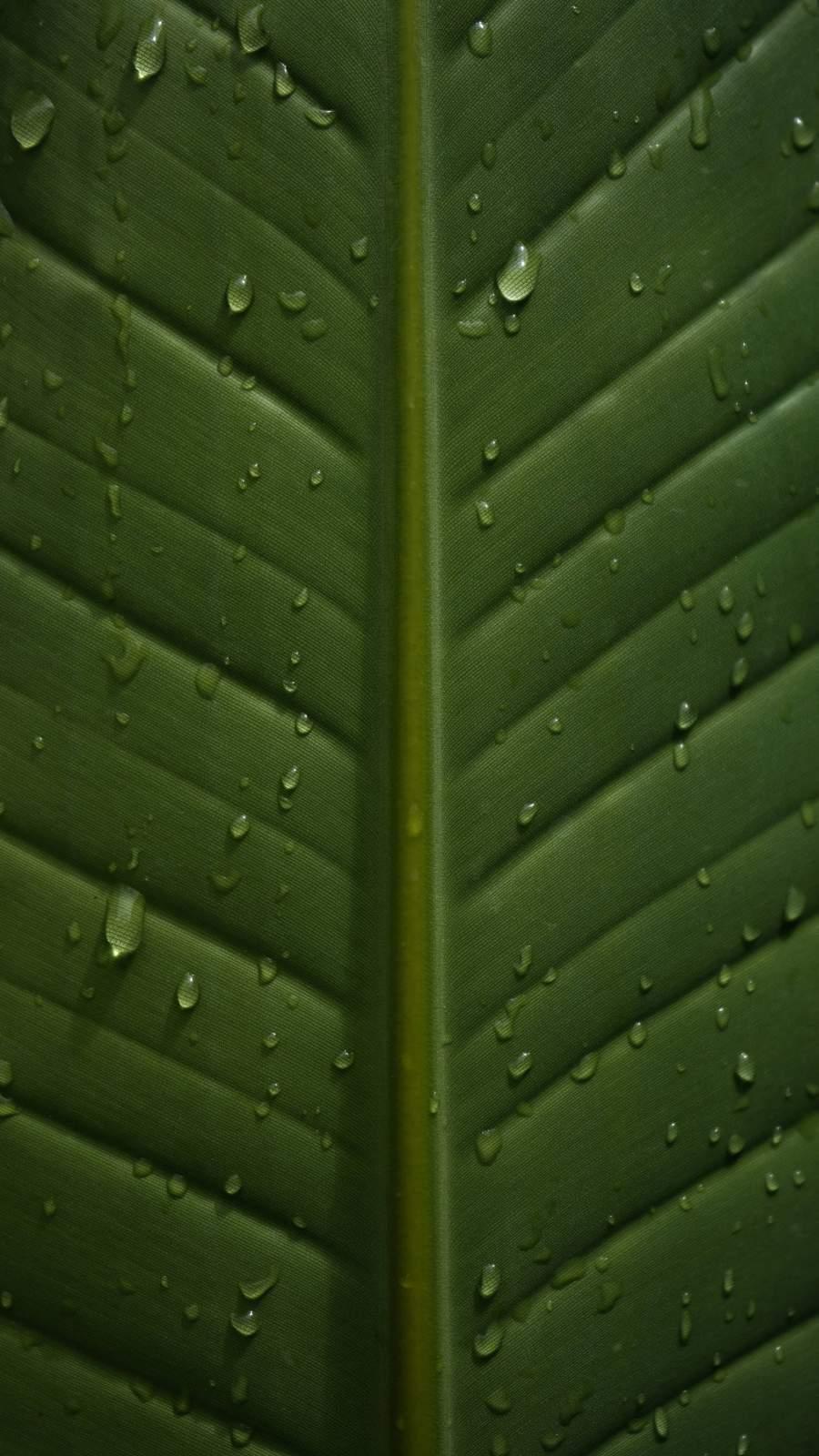 Raindrops On Leaf iPhone Wallpaper