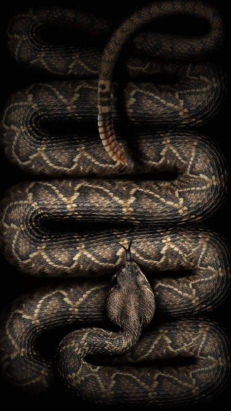 Rattlesnake iPhone Wallpaper