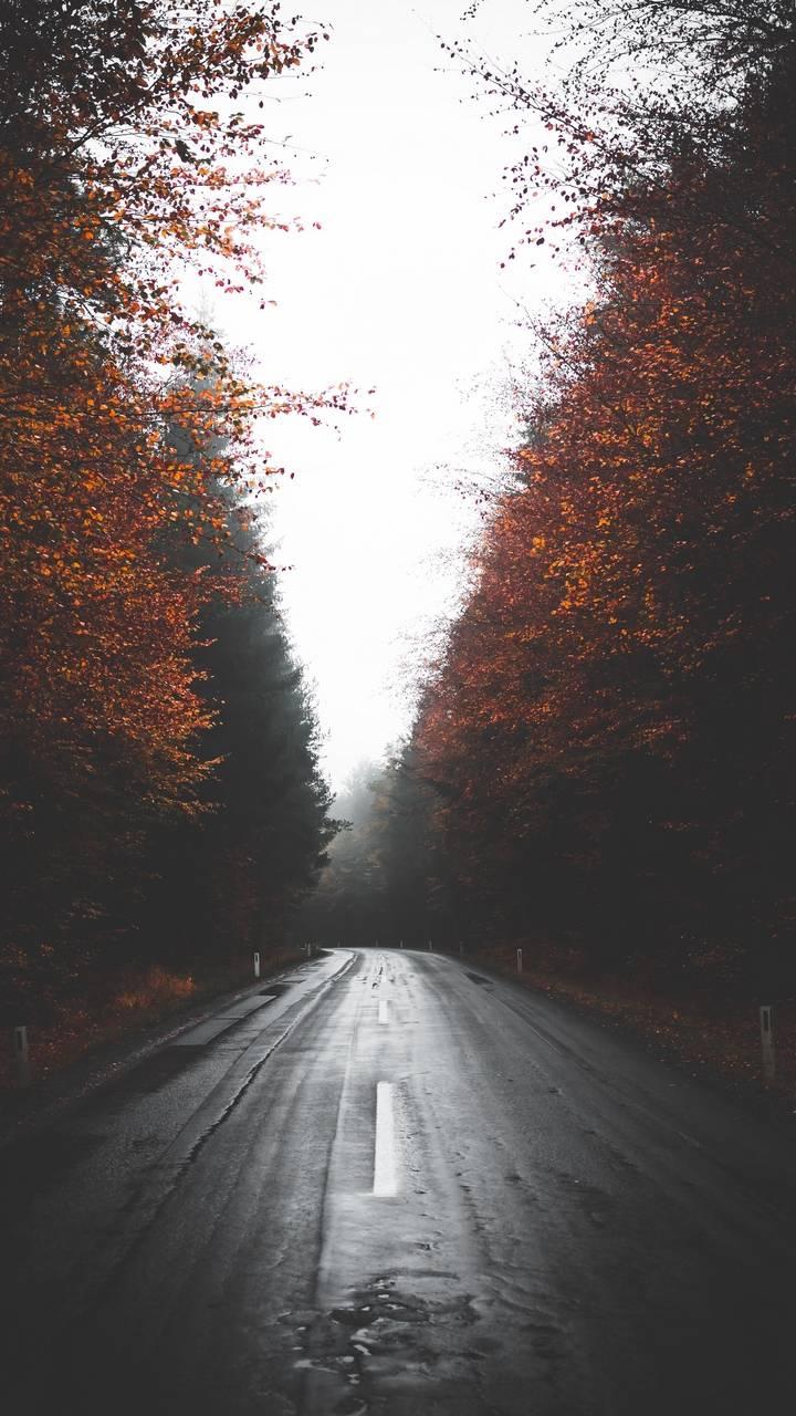 Autumn Wet Road
