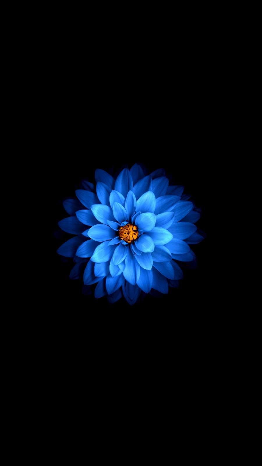 Dark Flower