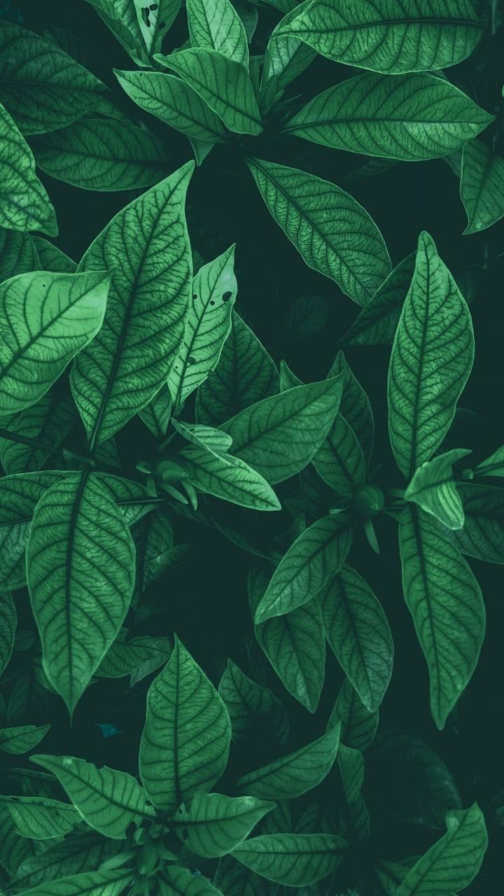 Green Foliage Plants