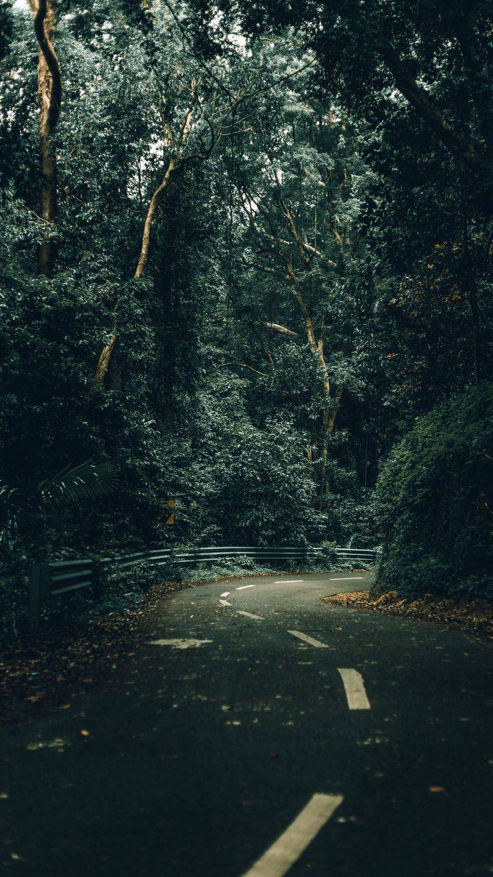 Green Road Nature