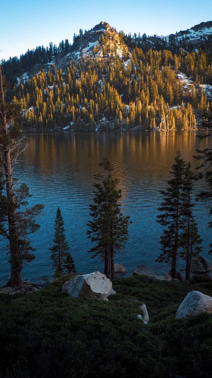 Lake Trees Nature