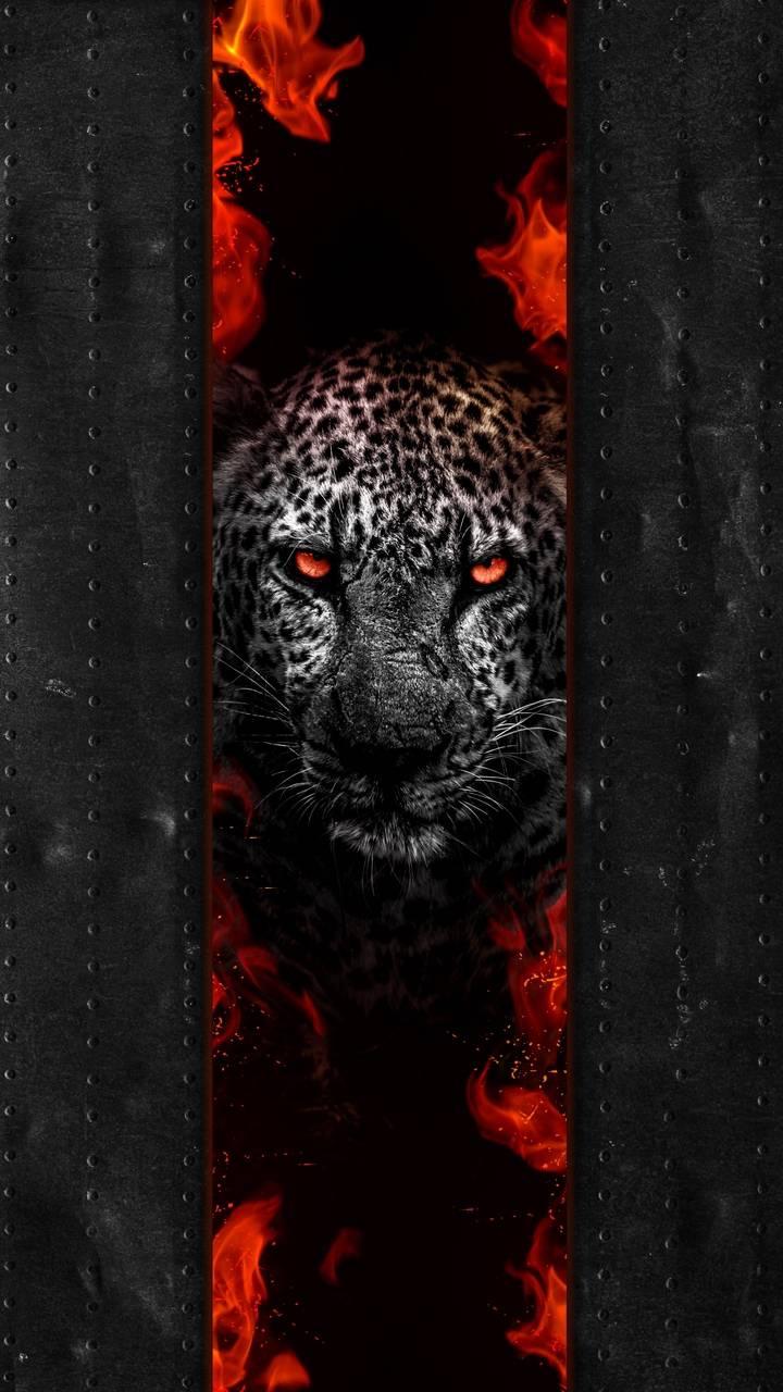 Leopard Predator