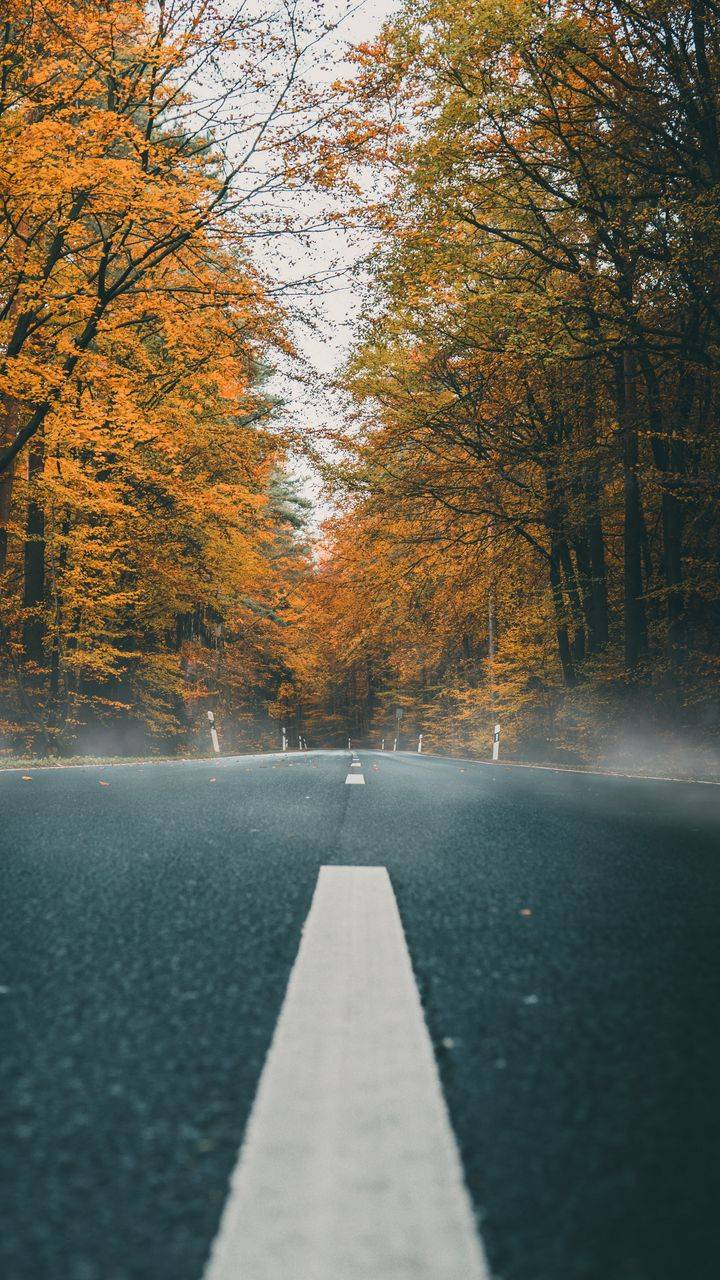 Nature Autumn Road