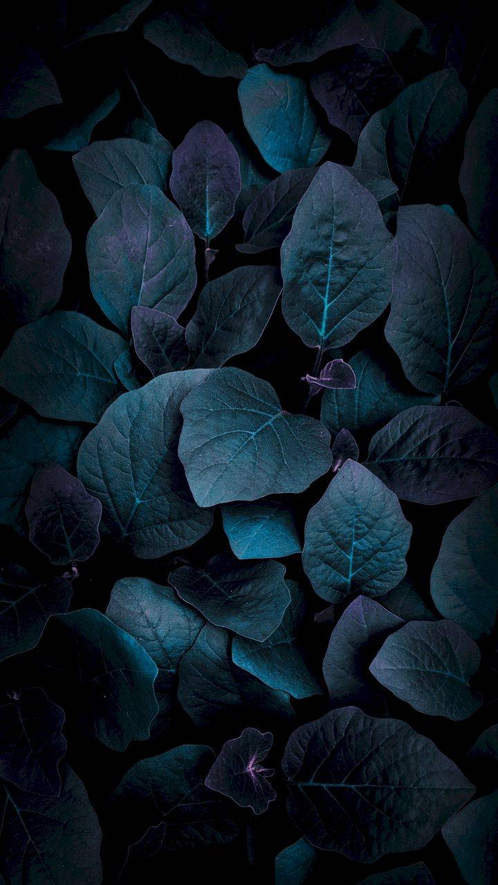 Nature Foliage Dark