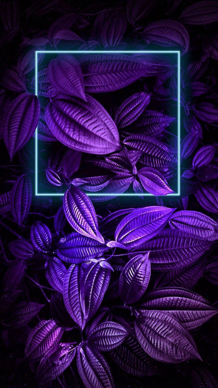 Purple Foliage Plants Neon