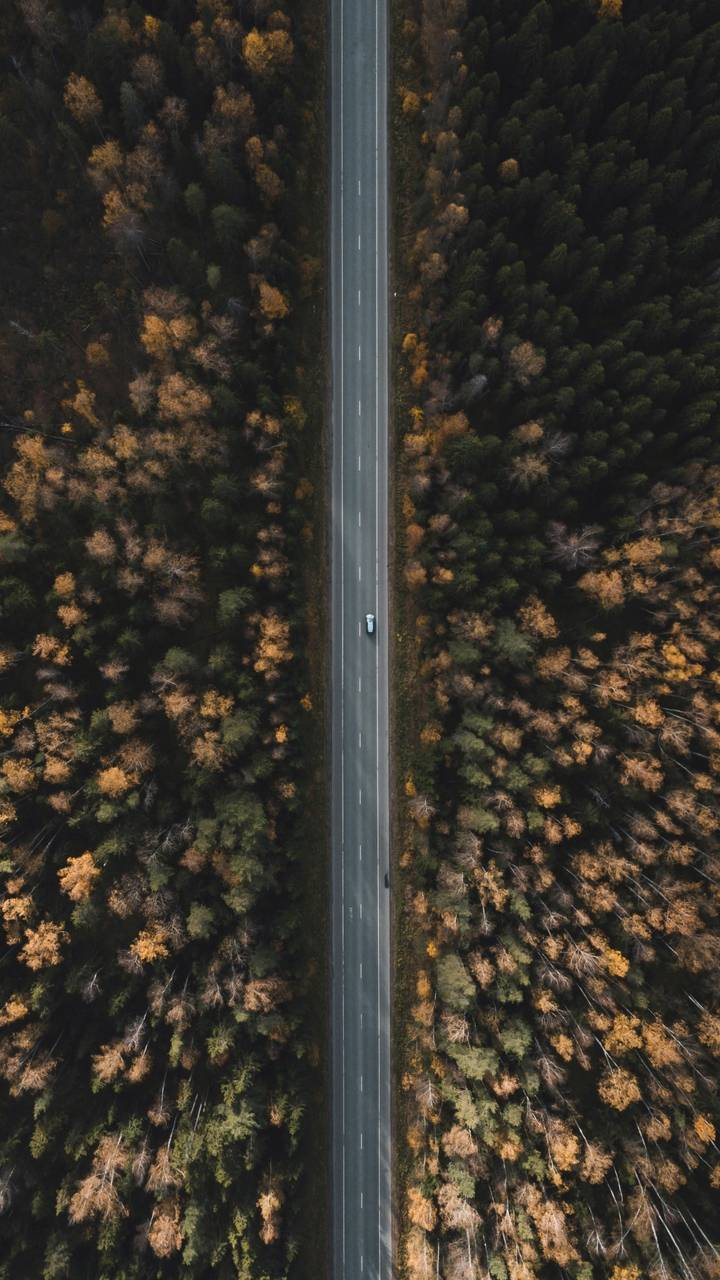 Straight Road Aerial View Nature
