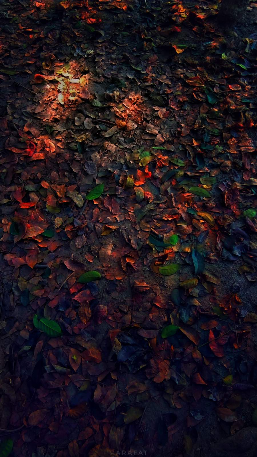 Autumn Tree Leaves iPhone Wallpaper