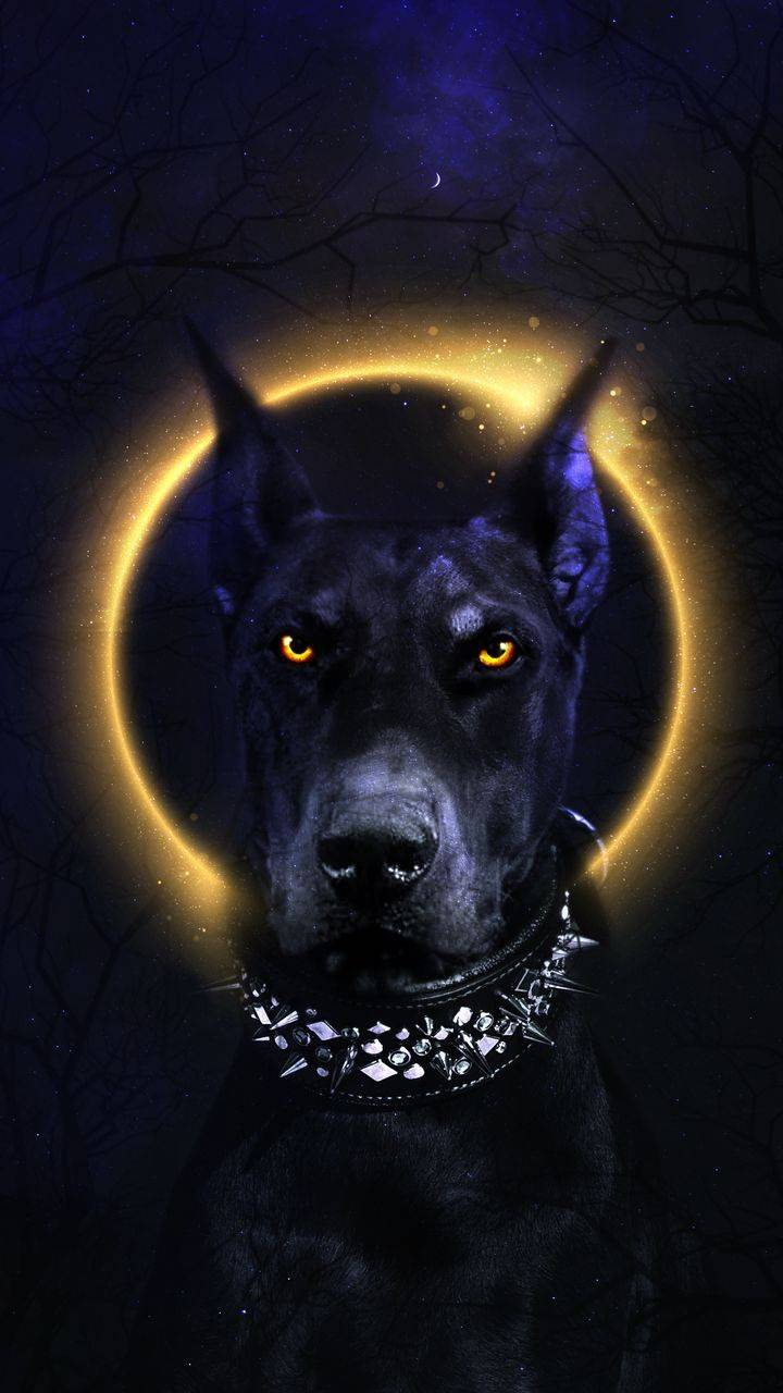 Black Dog iPhone Wallpaper
