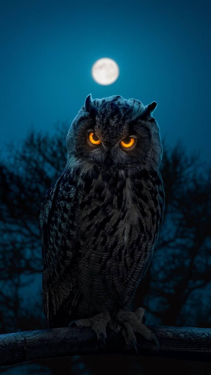 Glowing Eyes Owl