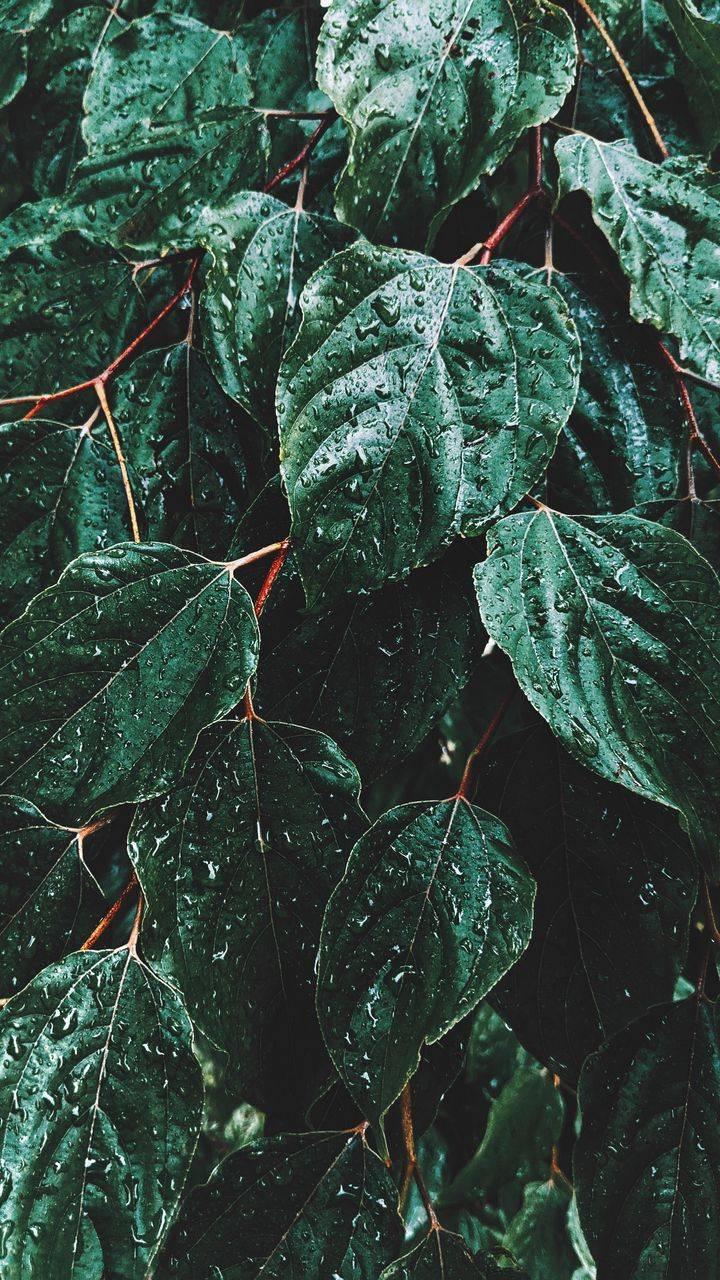 Green Rainforest Wallpaper