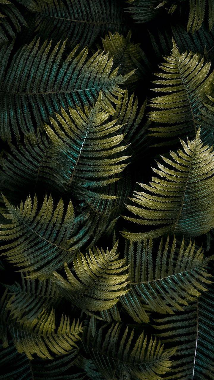 Nature Green Plants Wallpaper
