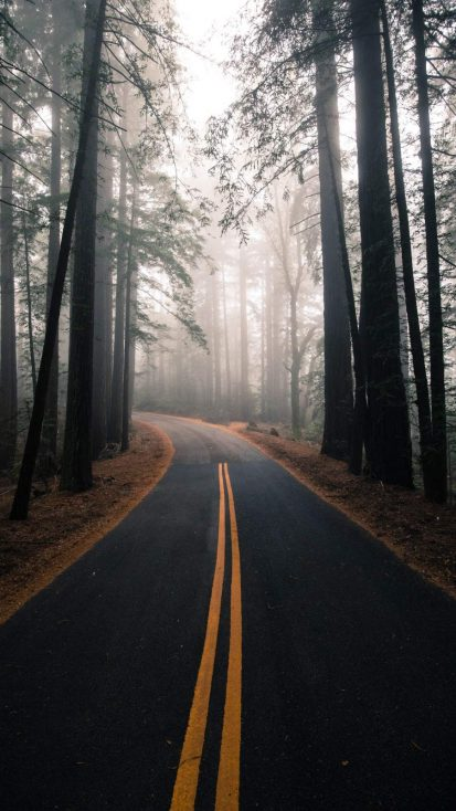 Nature Road Morning Fog iPhone Wallpaper
