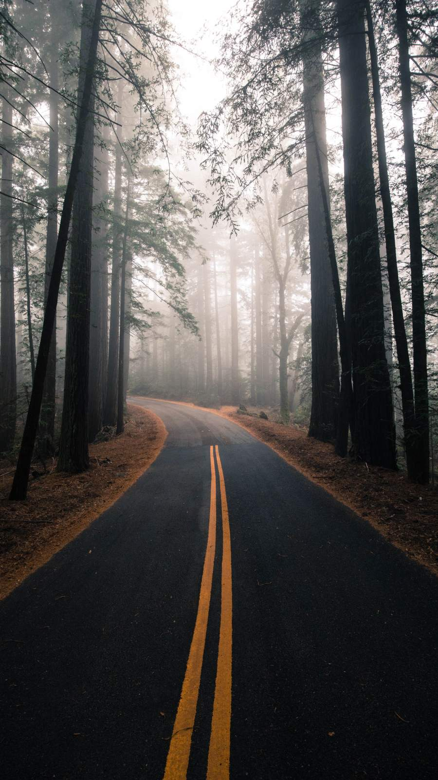 Nature Road Morning Fog iPhone Wallpaper