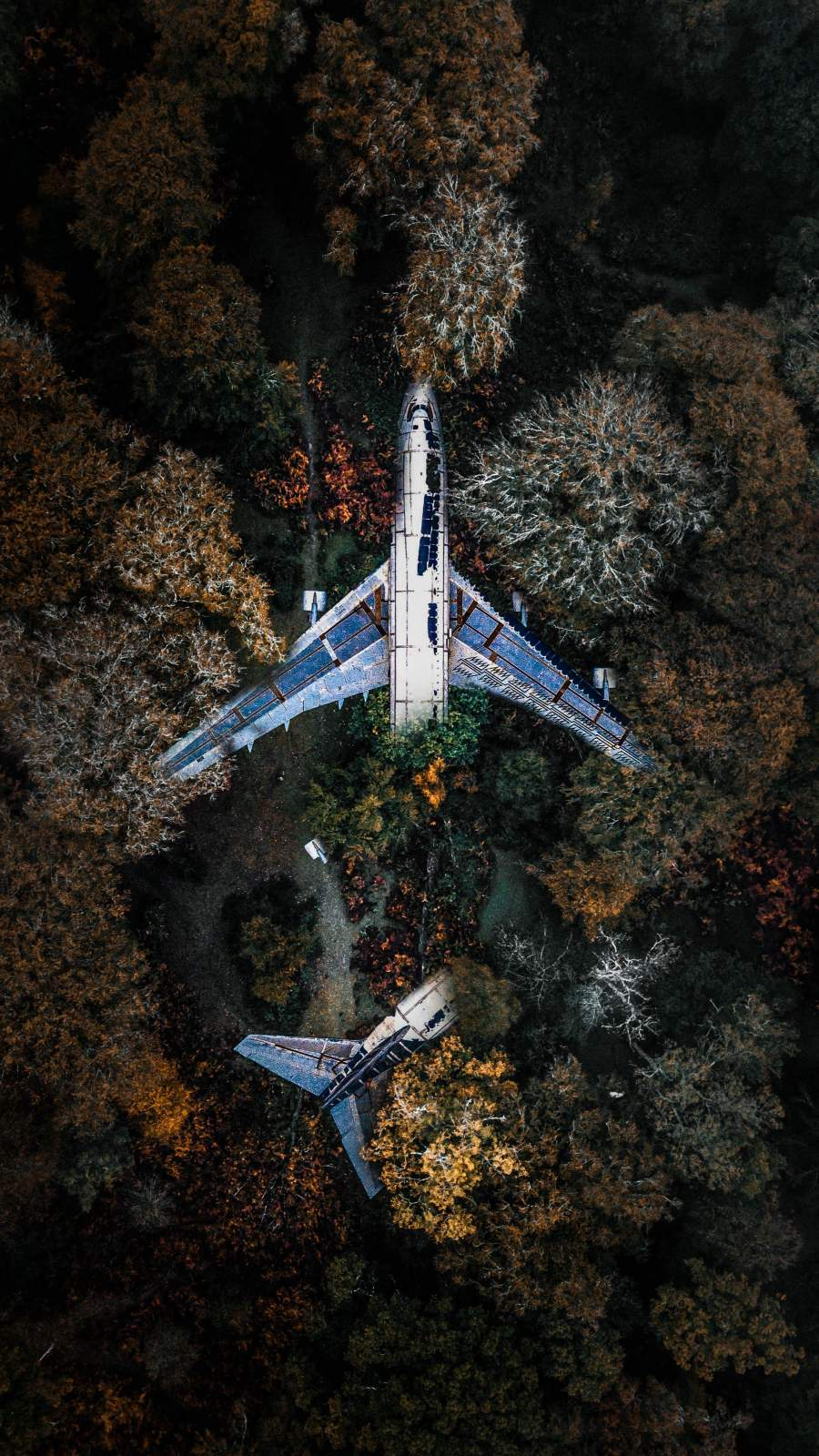 Plane in Forest iPhone Wallpaper