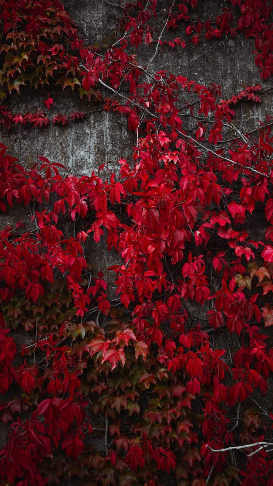 Autumn Tree Red Leaf