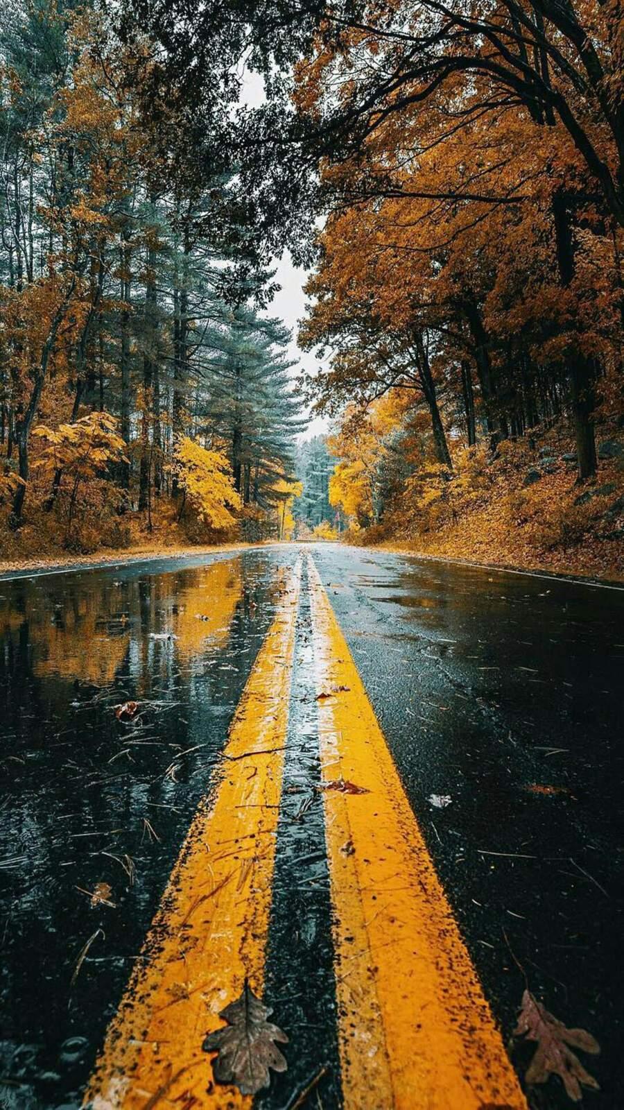 Autumn Wet Road Reflection iPhone Wallpaper