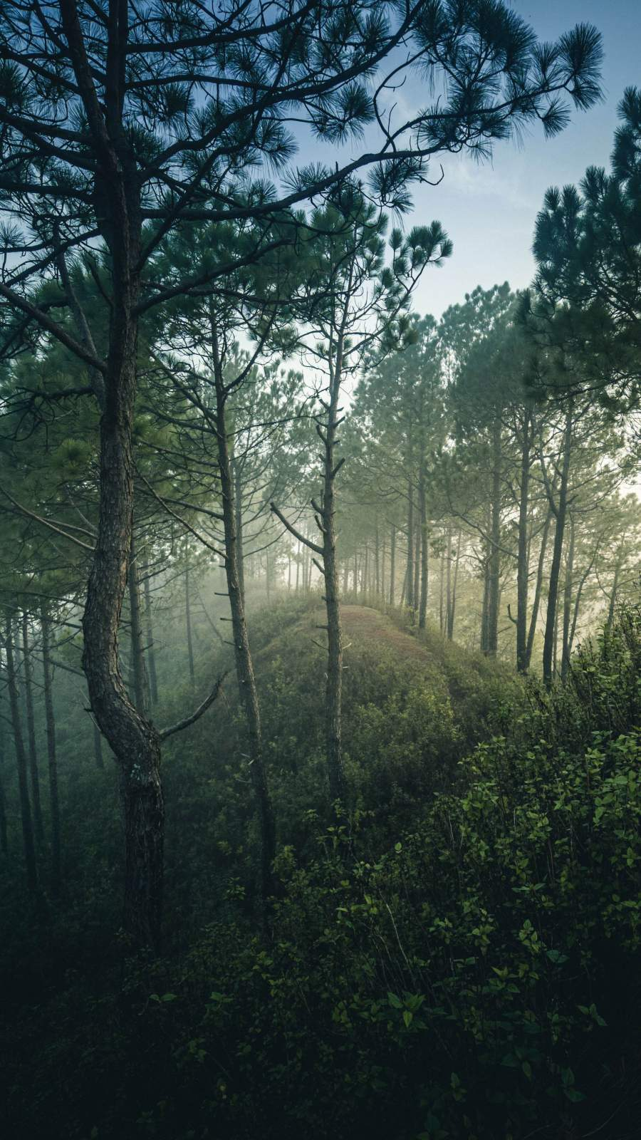 Forest Mist Sunrise Nature