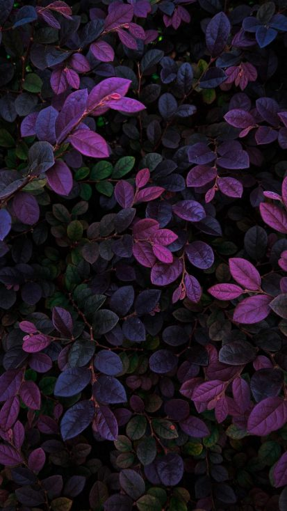 Nature Foliage Plants Wallpaper