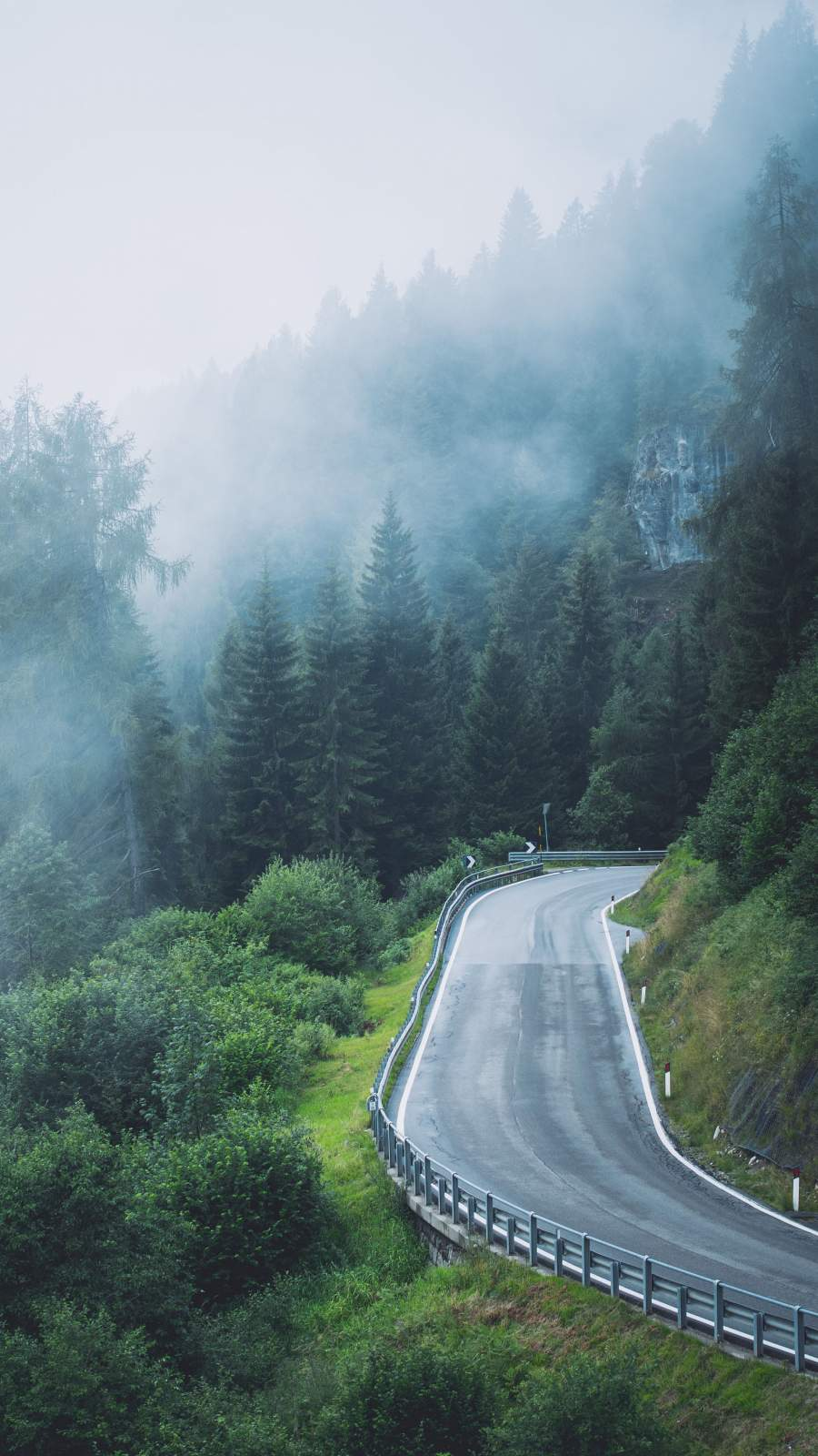 Nature Roads Forest Mist