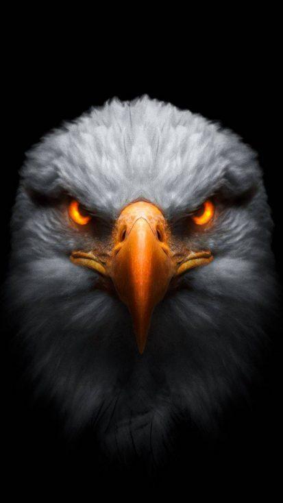 Predator Eagle iPhone Wallpaper