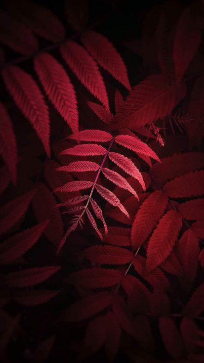 Autumn Foliage iPhone Wallpaper