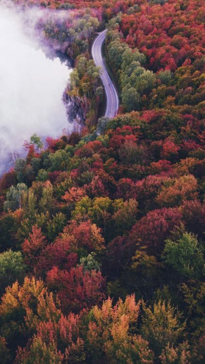Colorful Forest Road iPhone Wallpaper