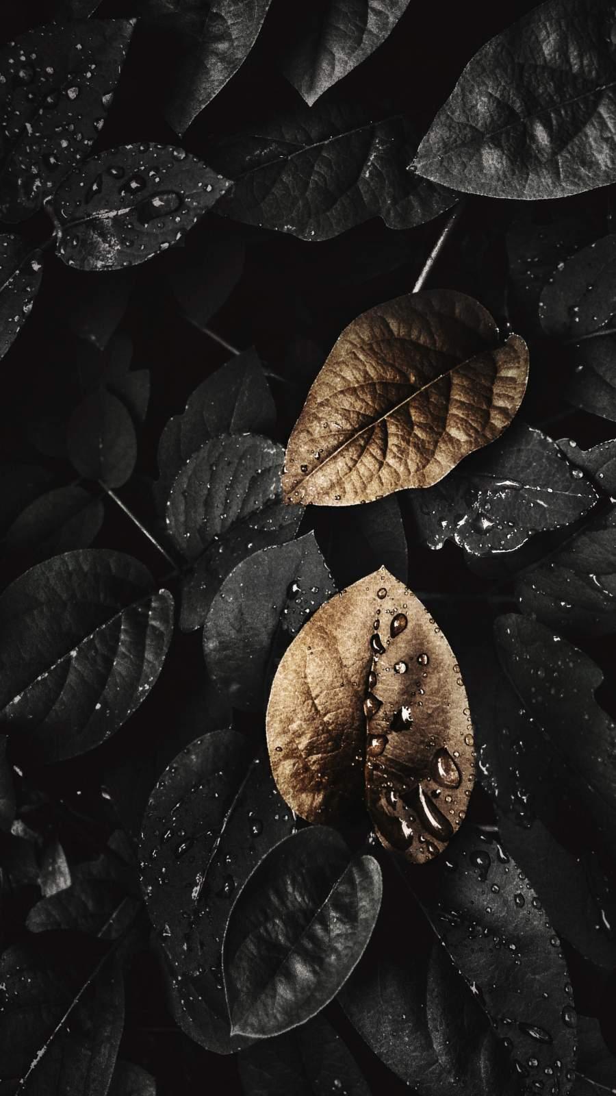 Dark Nature Foliage iPhone Wallpaper