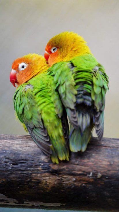 Love Birds iPhone Wallpaper