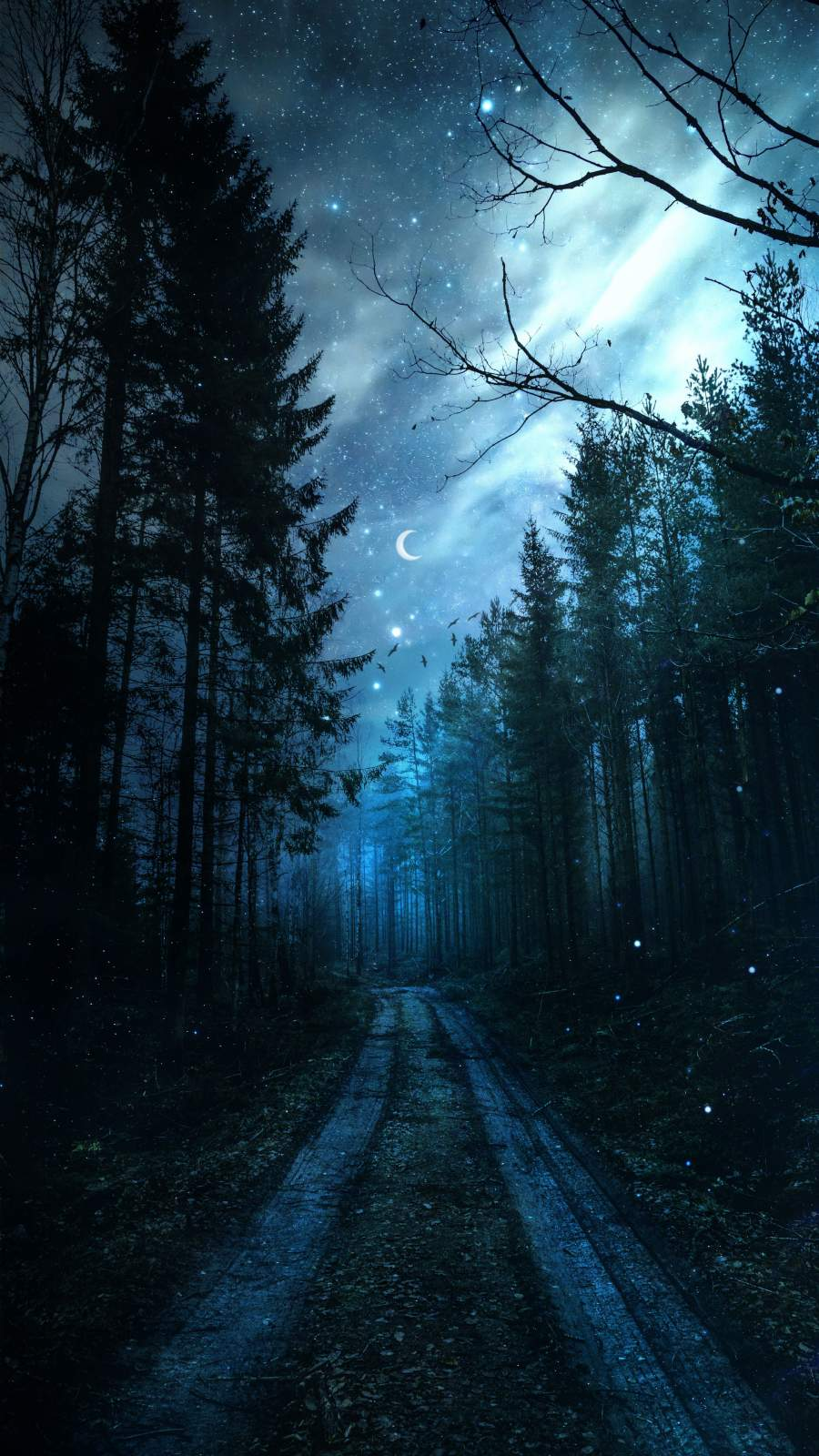 Magical Forest Night Starry Sky