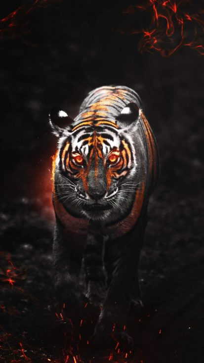Predator Tiger iPhone Wallpaper