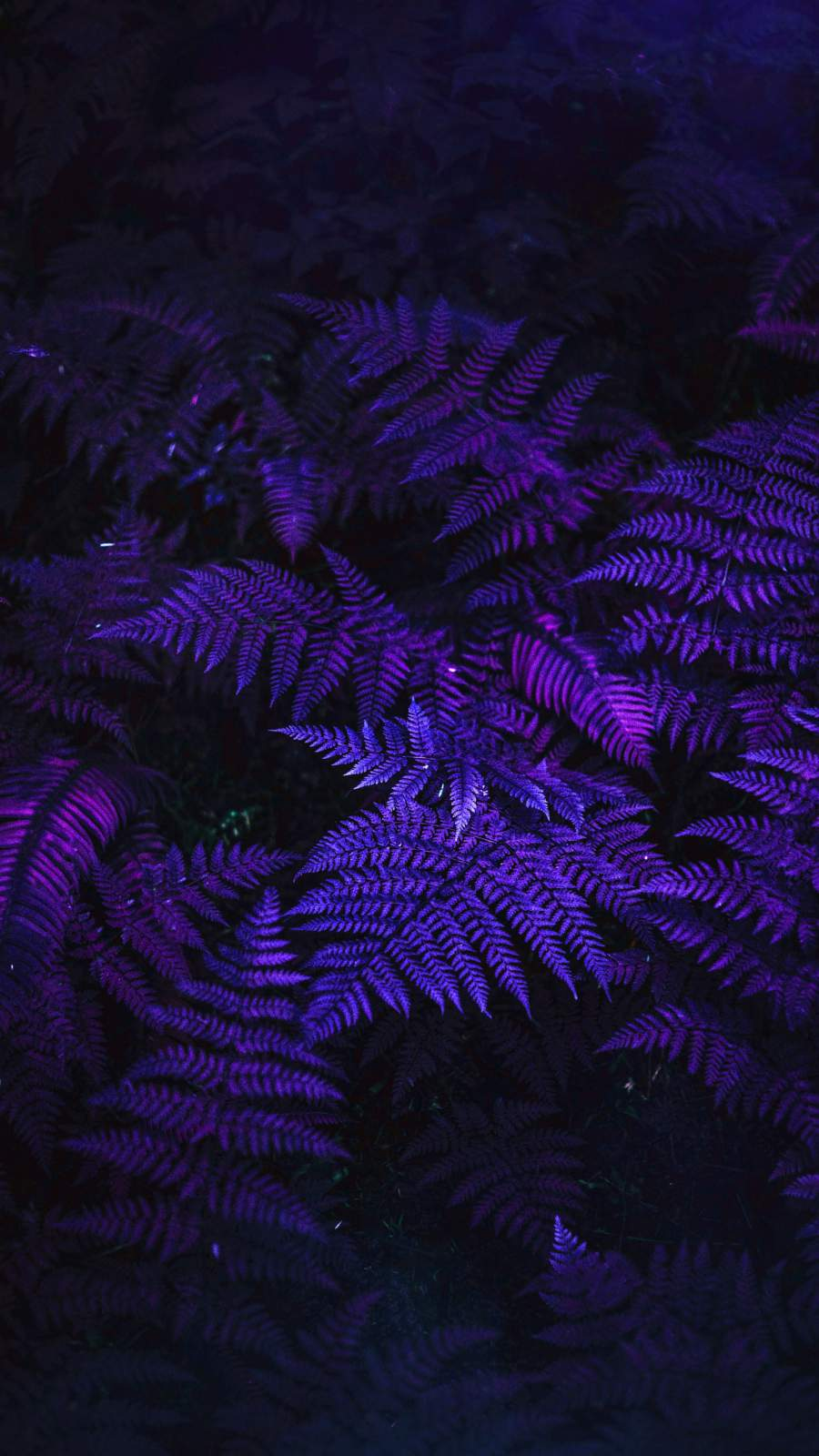Purple Forest Foliage iPhone Wallpaper