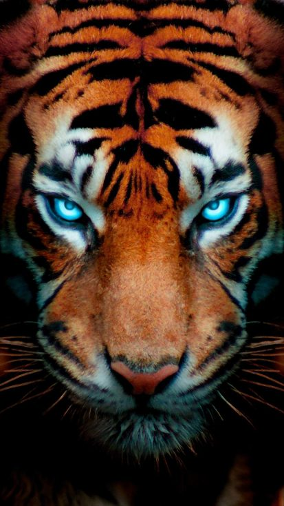Tiger Eyes Glow iPhone Wallpaper