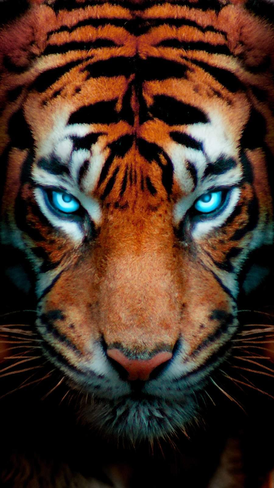 Tiger Eyes Glow iPhone Wallpaper