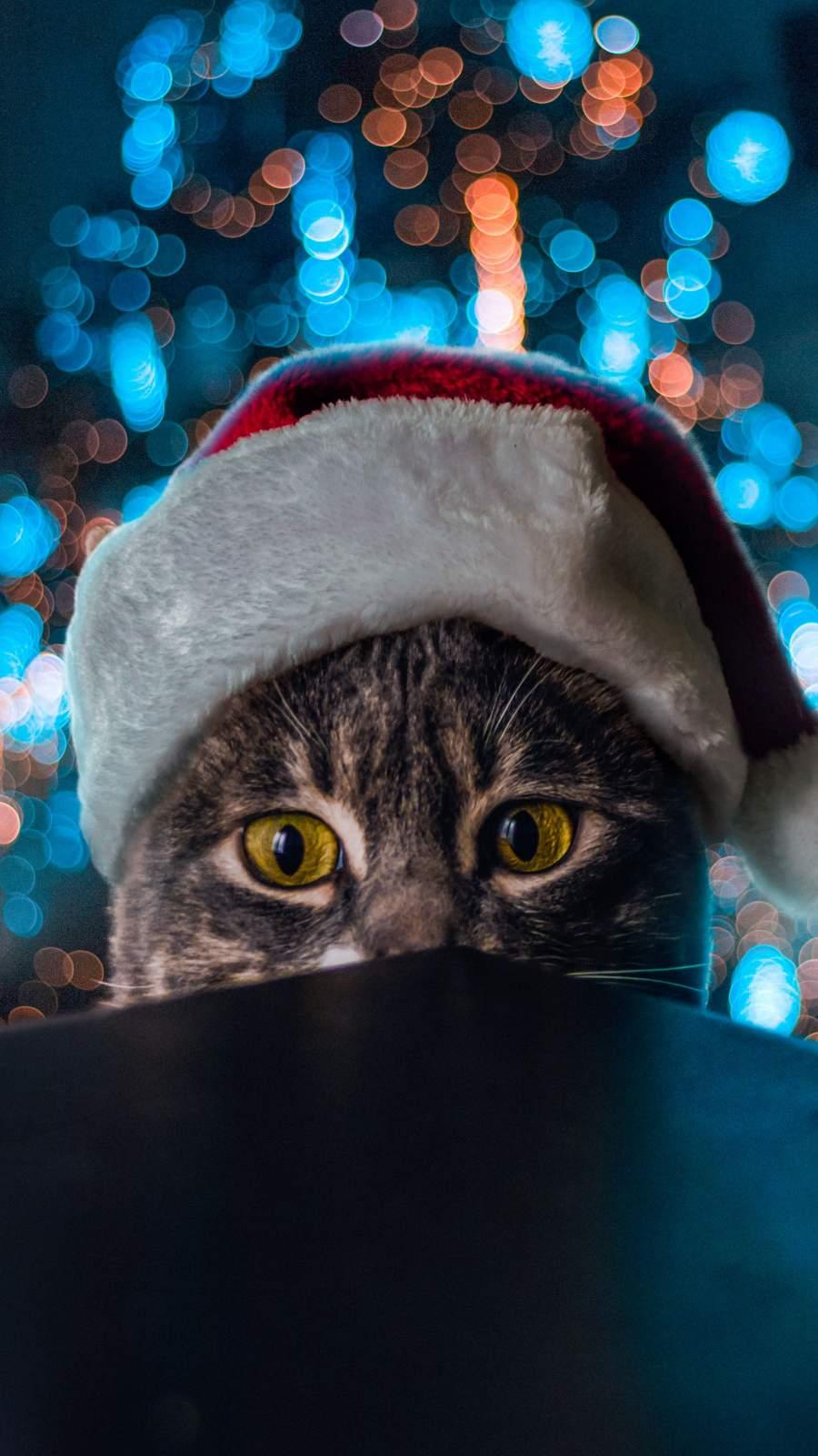 Cat Christmas iPhone Wallpaper