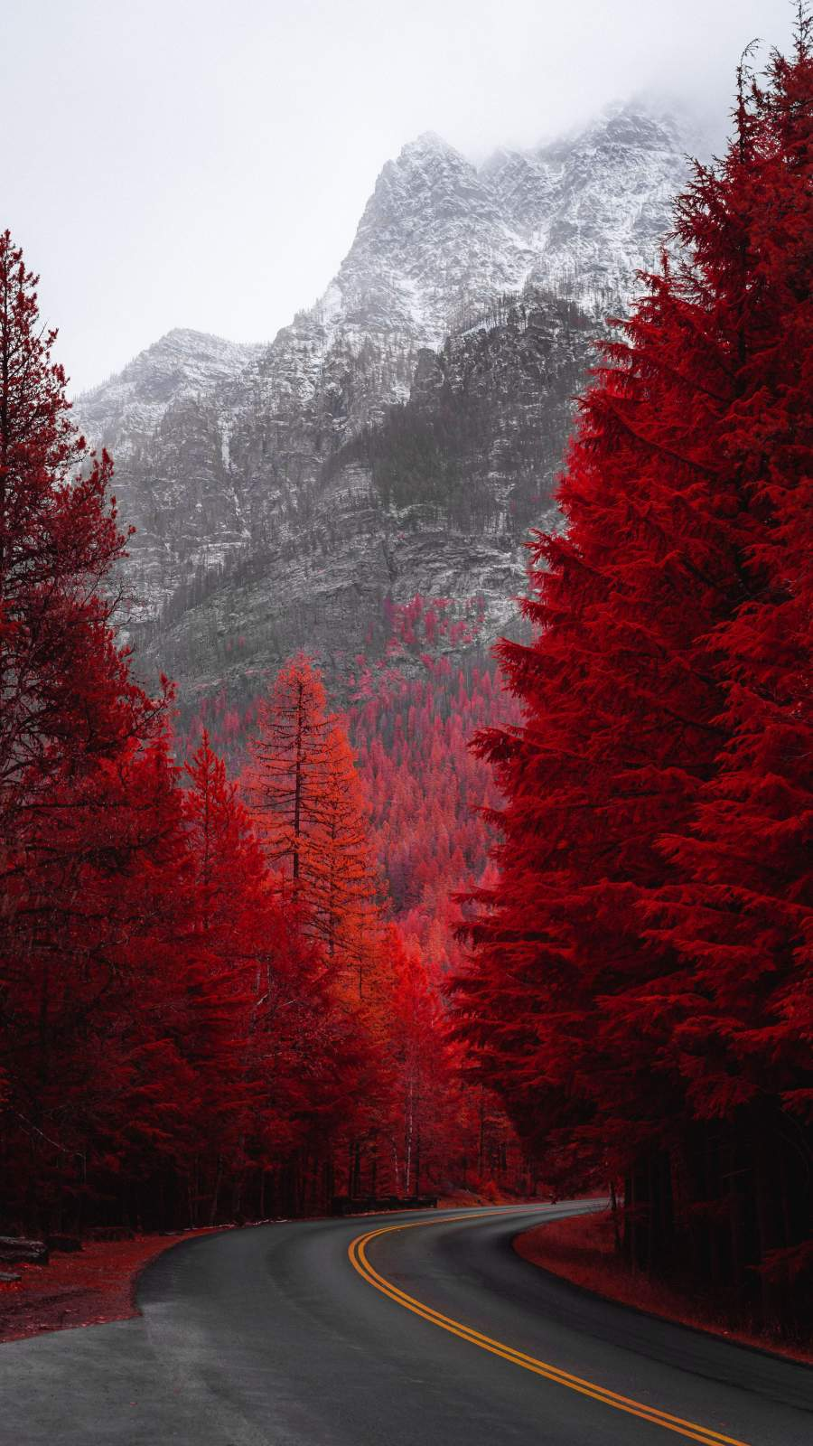Red Forest Road iPhone Wallpaper