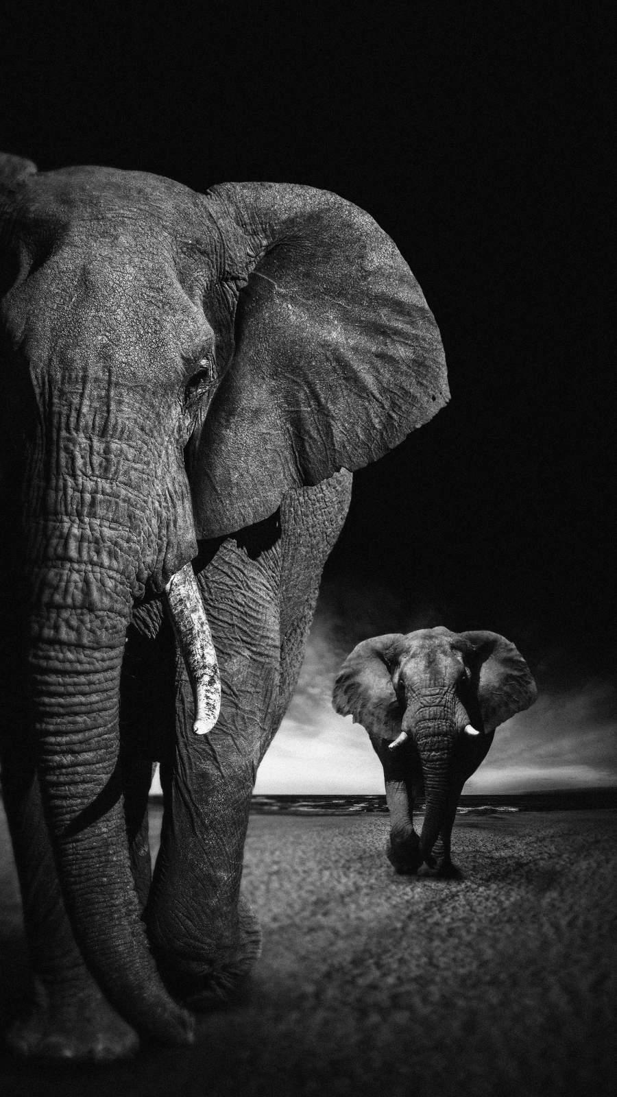 African Elephants iPhone Wallpaper