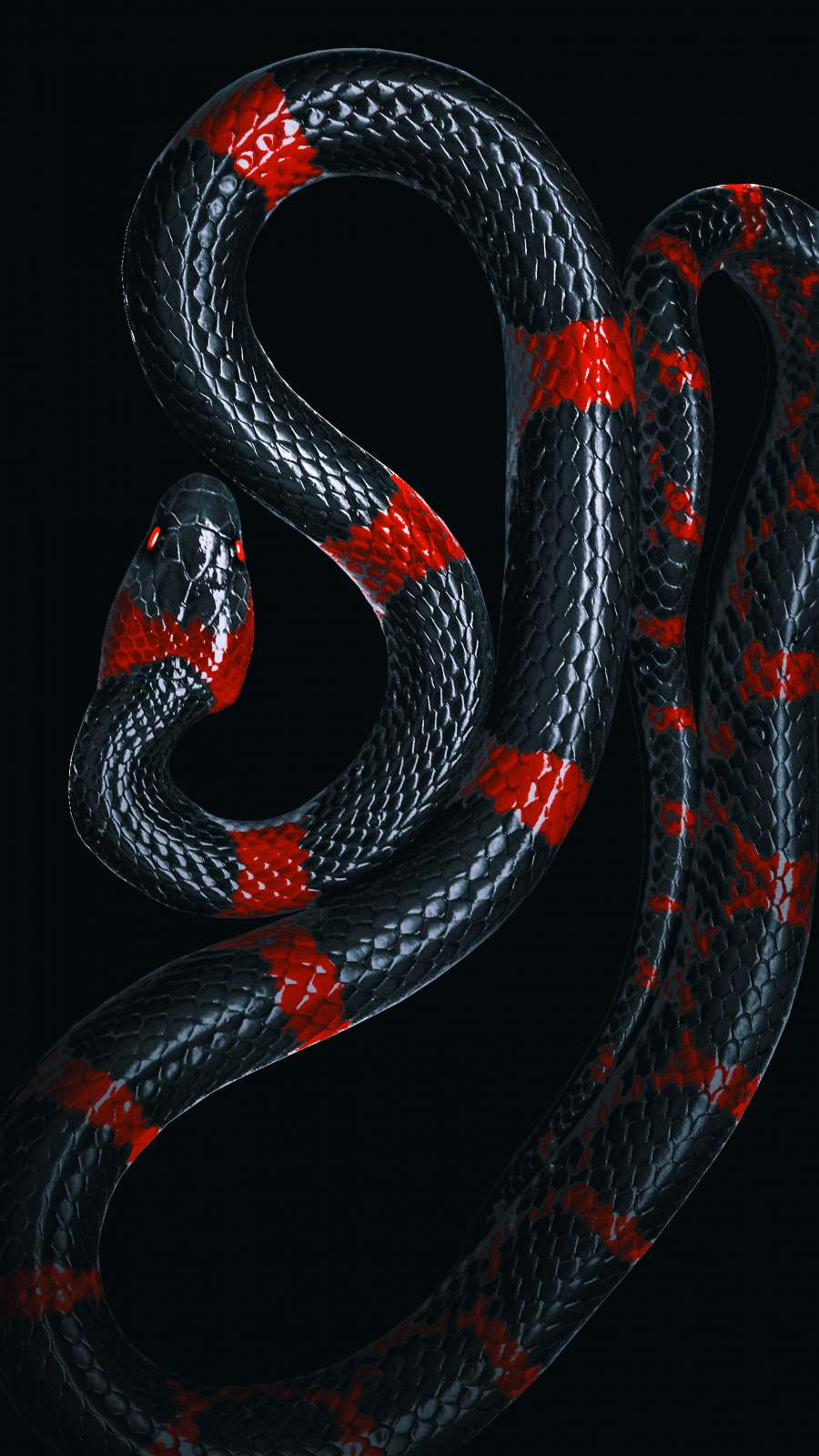 Black Snake iPhone Wallpaper
