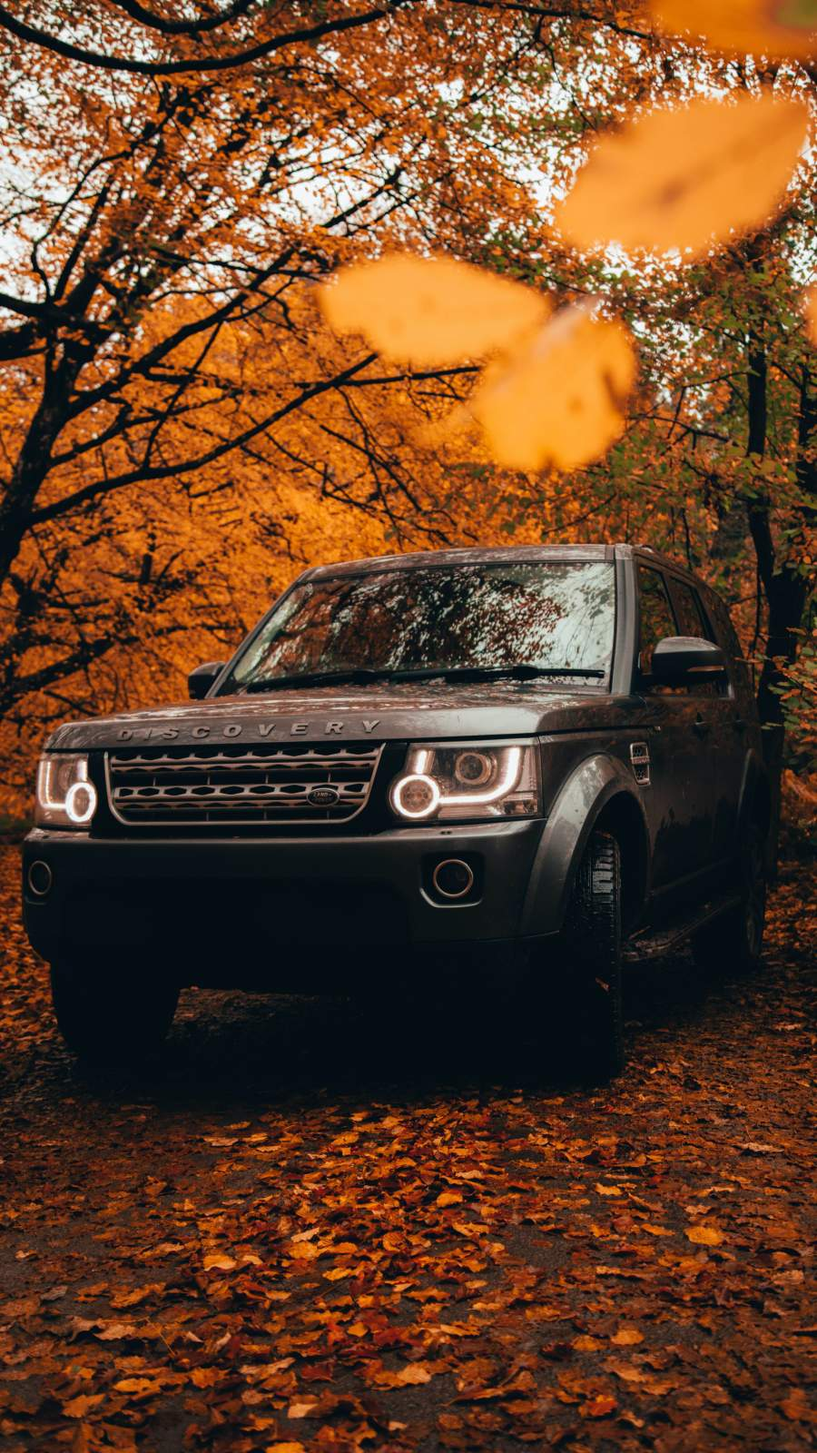 Land Rover Discovery Autumn