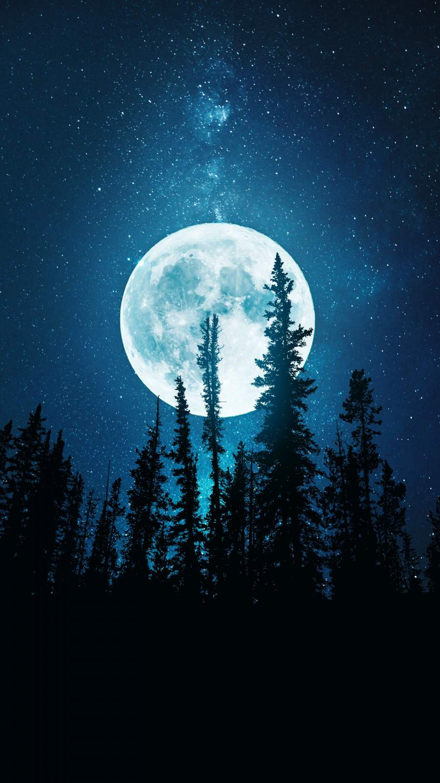 Night Trees and Moon