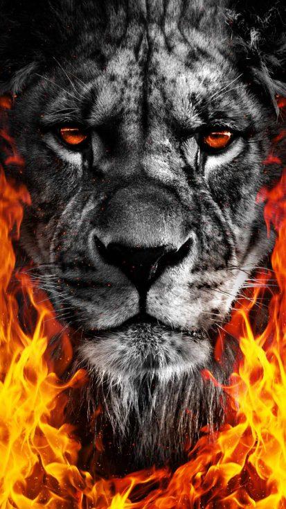 Lion King Fire