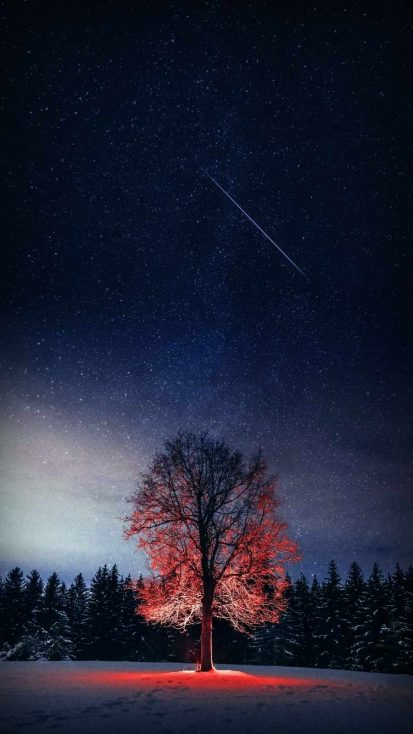 Night Tree Starry Sky