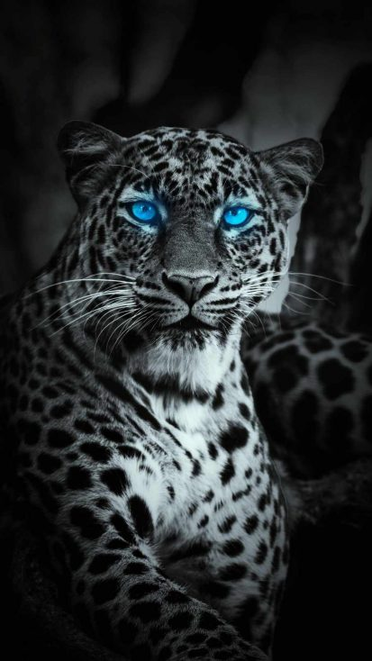 Blue Eye Jaguar iPhone Wallpaper