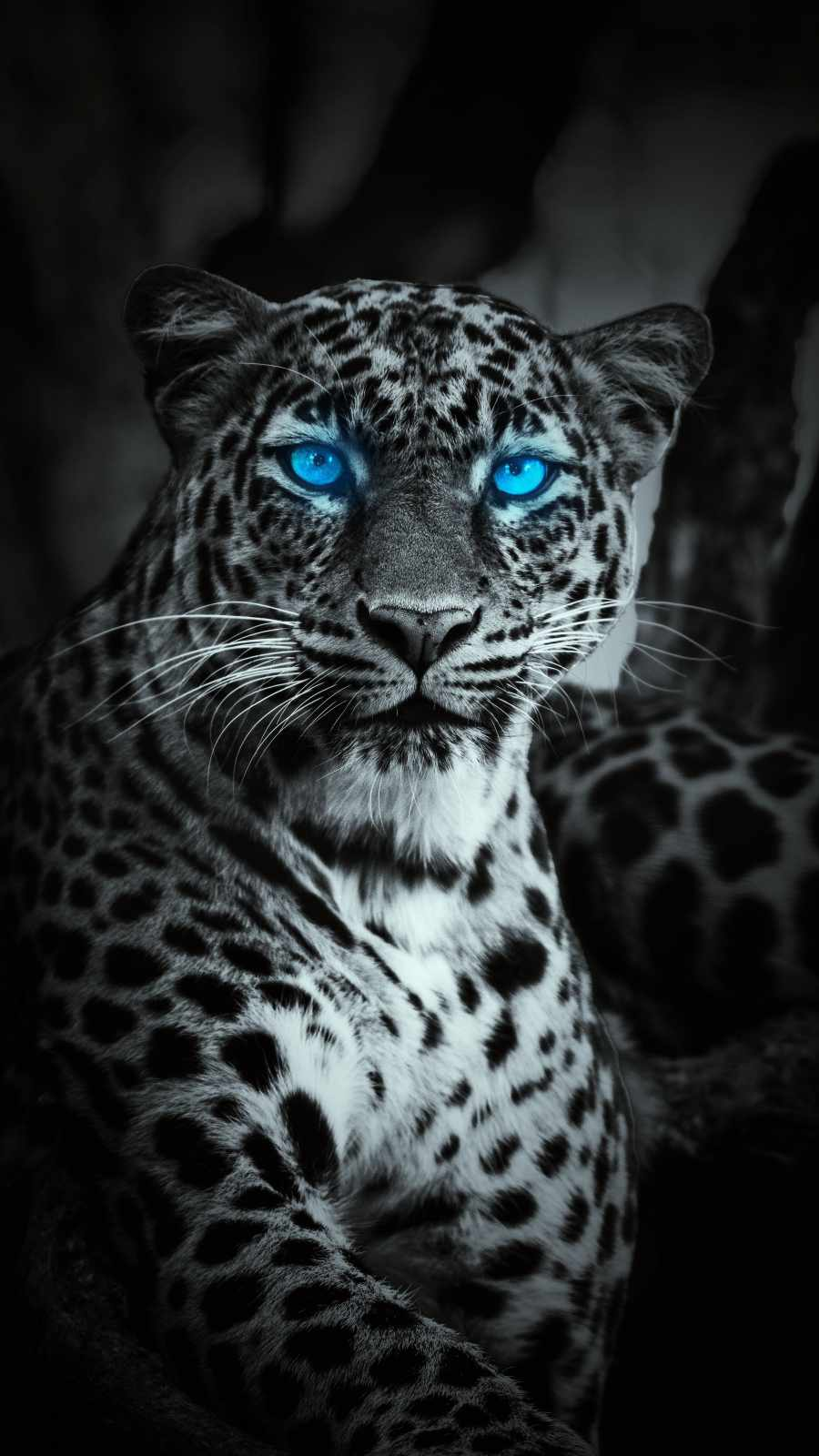 Blue Eye Jaguar iPhone Wallpaper