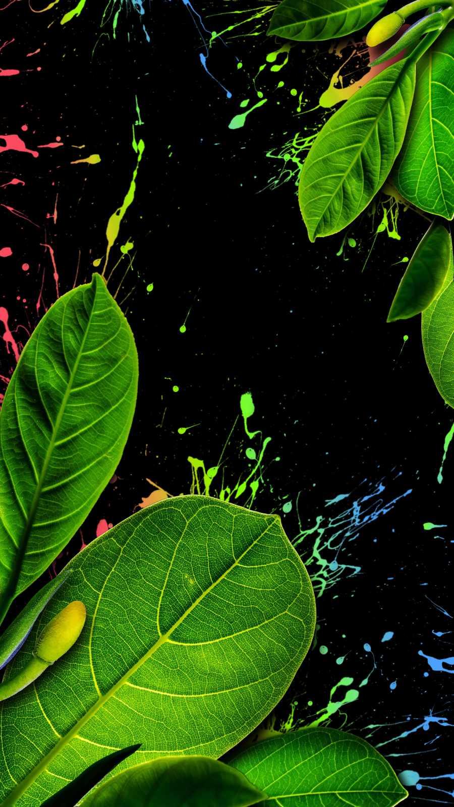 Nature Splash iPhone Wallpaper