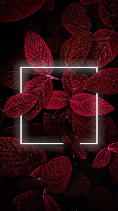 Neon Red Foliage iPhone Wallpaper