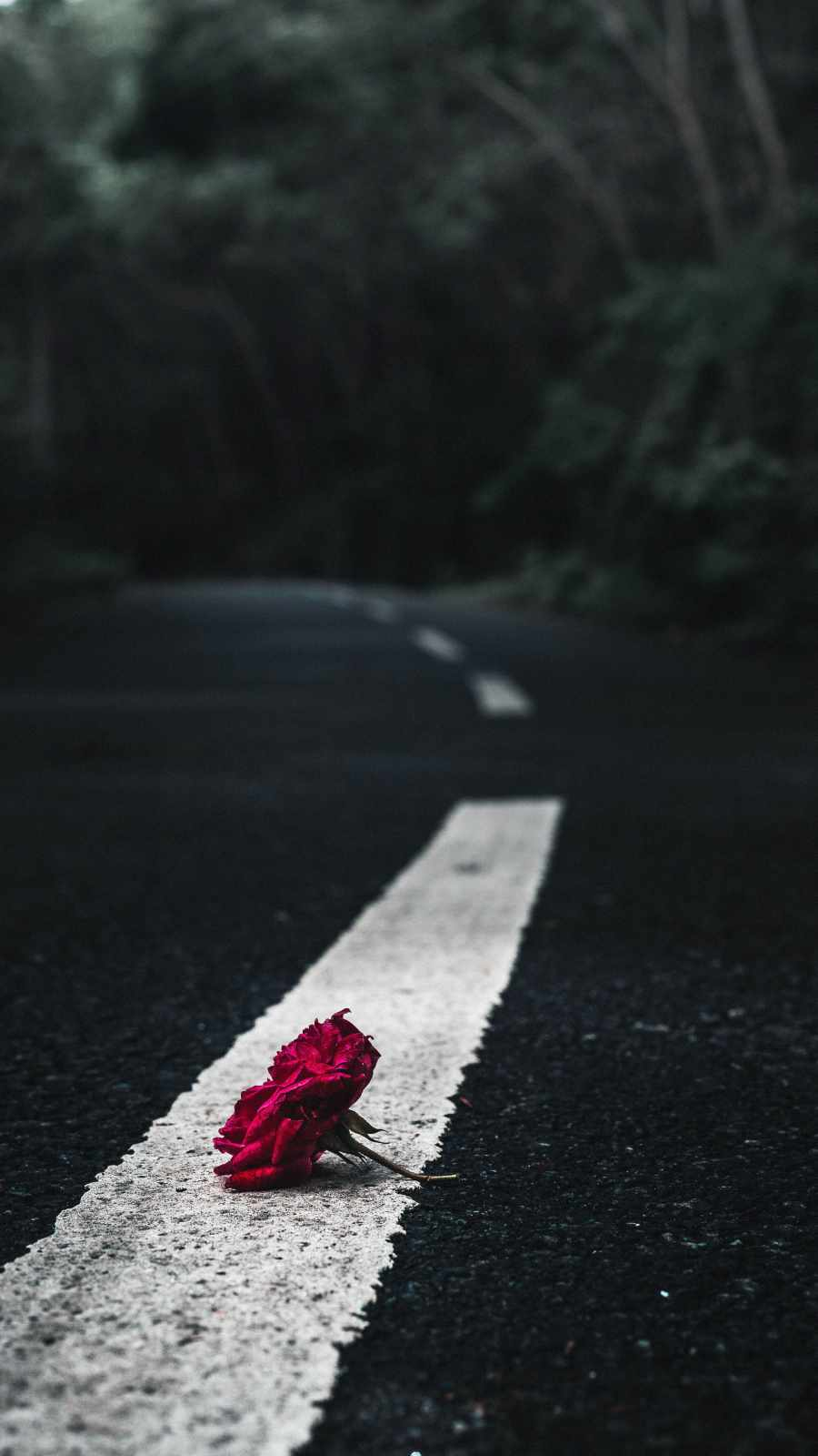 Rose on Road iPhone Wallpaper