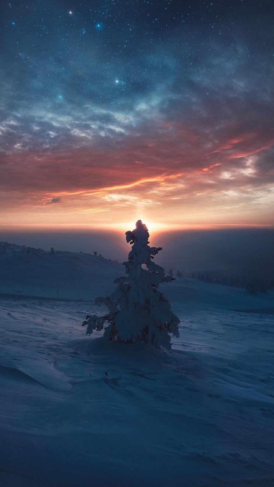 Snow Tree Horizon